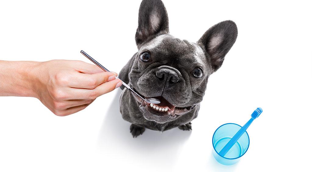 人間と動物の歯の違い